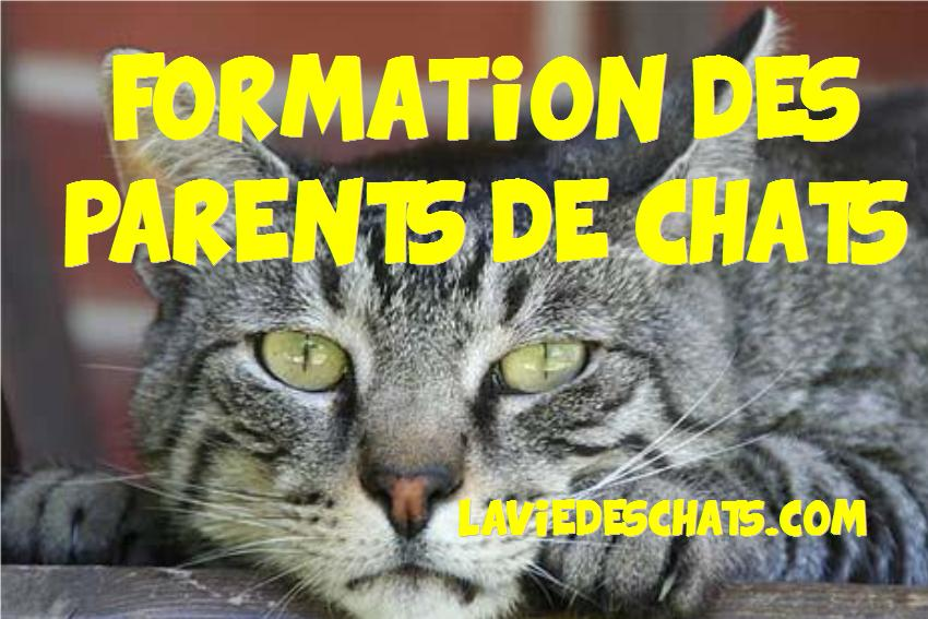 formation parents de chats