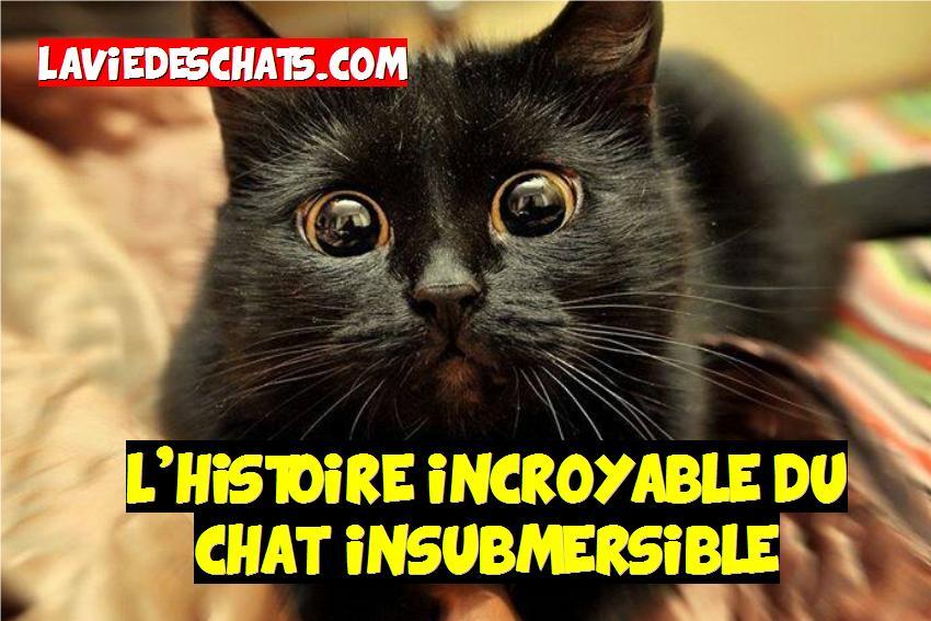 l'histoire du chat insubmersible