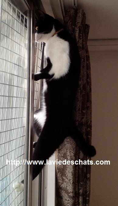 un chat miaule derrière la fenêtre