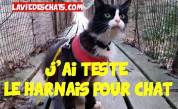 le harnais pour chat en test