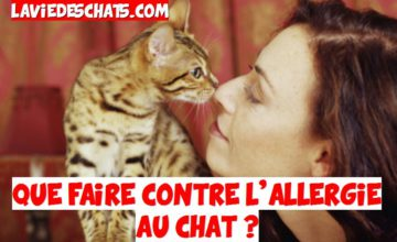 que faire contre l'allergie au chat