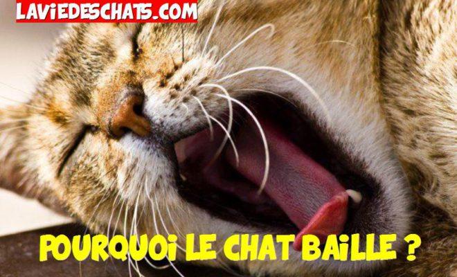 Pourquoi Le Chat Baille La Vie Des Chats