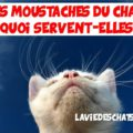 moustaches du chat servent à quoi
