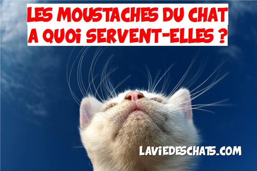 moustaches du chat servent à quoi