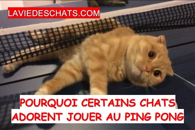 Pourquoi les chats aiment jouer au ping pong