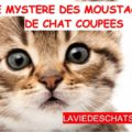 moustaches de chat coupées