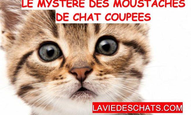 R 233 V 233 Lation Sur Le Myst 232 Re Des Moustaches De Chat Coup 233 Es