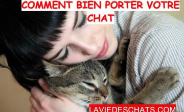 Comment bien porter un chat