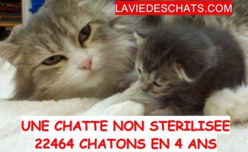 22464 chatons avec chatte non sterilisee