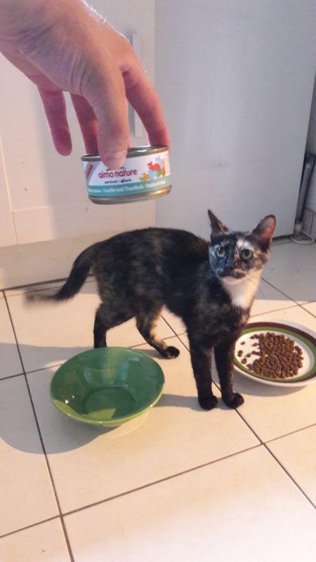 almo nature pour chat stérilisé 2