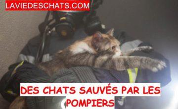 chat sauvé par les pompiers