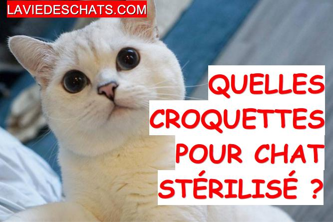 croquettes pour chat stérilisé