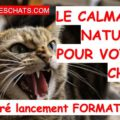 calmant naturel zylkene pour chat