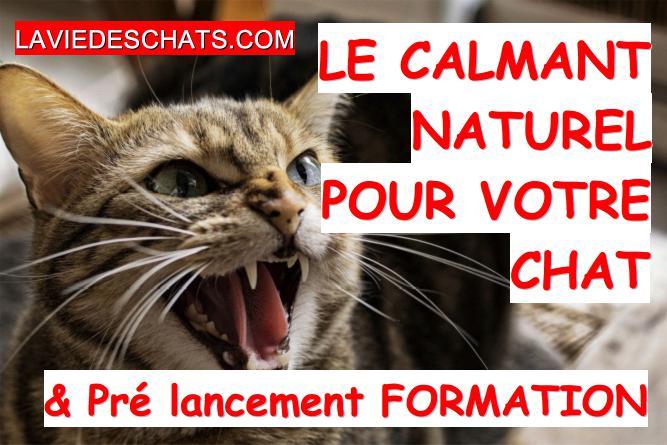 calmant naturel zylkene pour chat