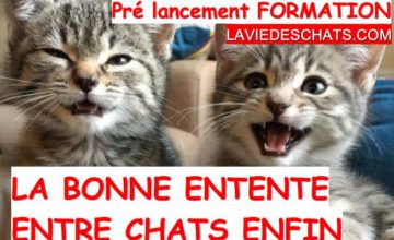 bonne entente entre chats