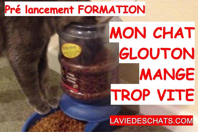 solutions pour chat glouton qui mange trop vite