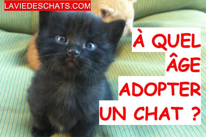 A quel age adopter un chat