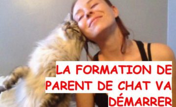 formation parent de chat ouvre