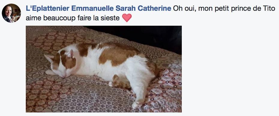 sieste de chat 4