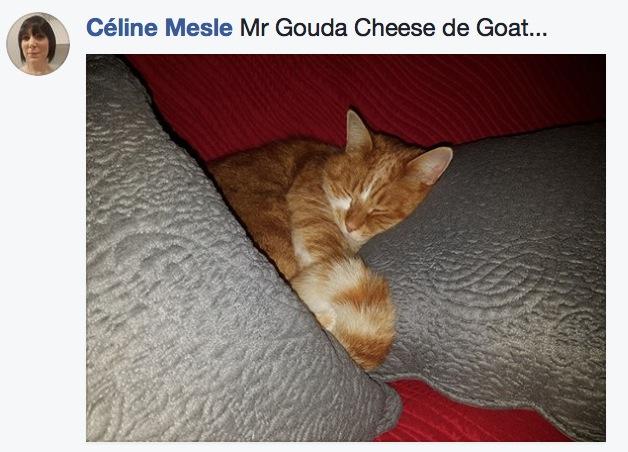 sieste de chat 7