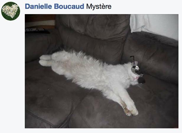sieste de chat 8