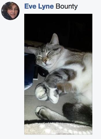 sieste de chat 9