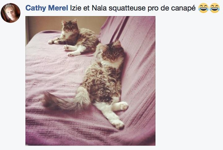 sieste de chat 11