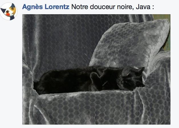 sieste de chat 14