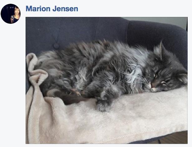 sieste de chat 16