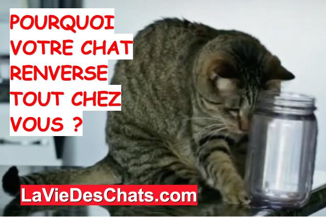 chat qui fait tomber table