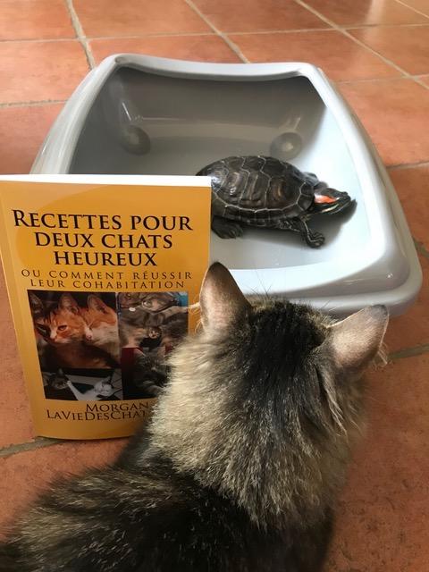 sauvetage de ce petit chat smoky avec la tortue rocky chez Sylvie