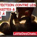 protection anti parasitaire pour votre chat