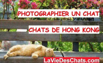 photographier un chat