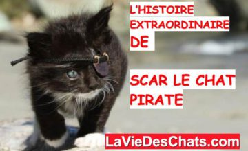 scar le chat pirate