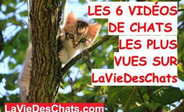 videos de chats les plus vues