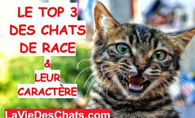 Le Top 3 Des 🐱 Chats De Race La Vie Des Chats