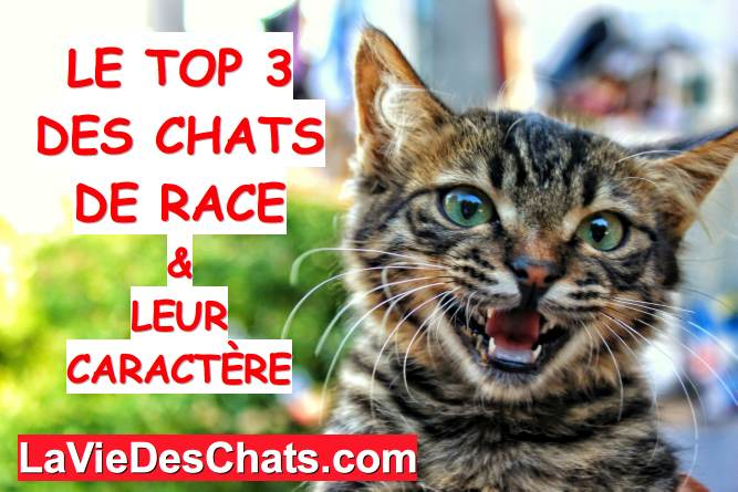 top 3 des chats de race
