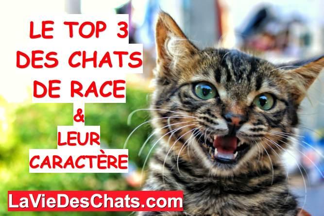 top 3 des chats de race