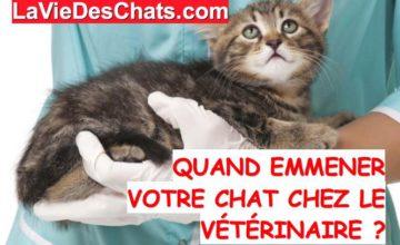 votre chat chez le veterinaire