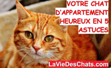 chat d'appartement heureux
