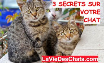 secrets sur votre chat