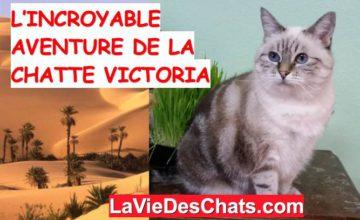 l'aventure de la chatte victoria