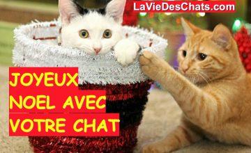 Chat Noel Image noel de chat - la vie des chats