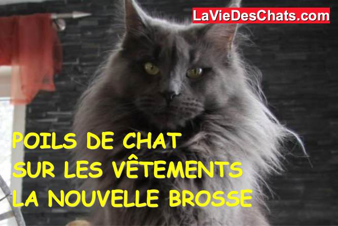 brosse anti poils de chat snoofield