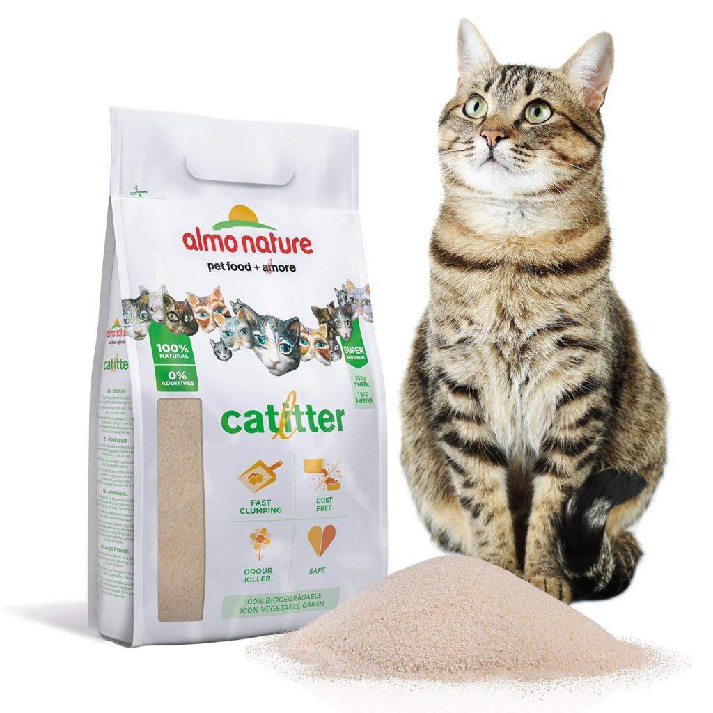 Mon Chat Dort Sur Mes Pieds comment deux chats ensemble peuvent vivre