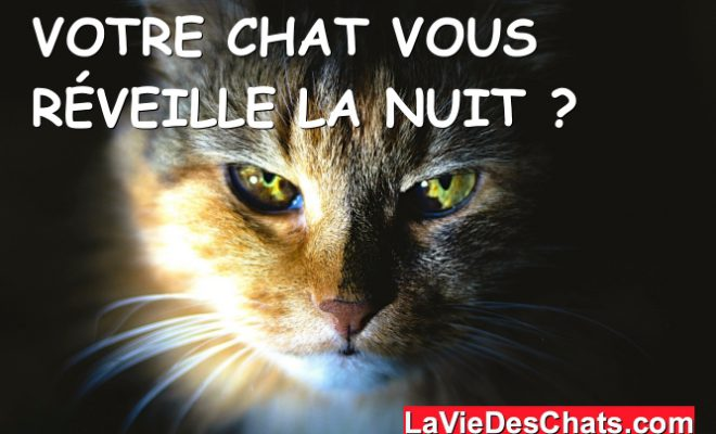 Votre chat vous réveille la nuit ? ???? La vie des chats