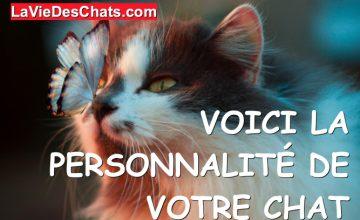 personnalité de votre chat