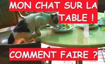mon chat monte sur la table