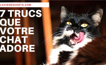 7 trucs pour que votre chat vous adore