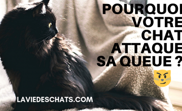 Pourquoi un chat attaque sa queue